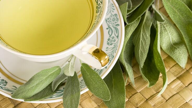 Tisane de sauge : toutes ses vertus santé