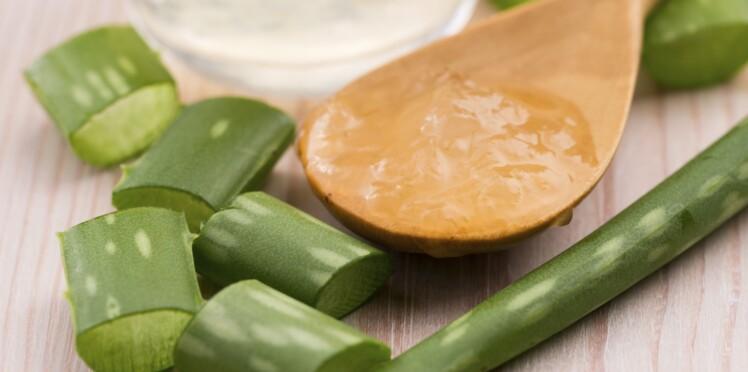 Aloe vera : comment l'utiliser ?