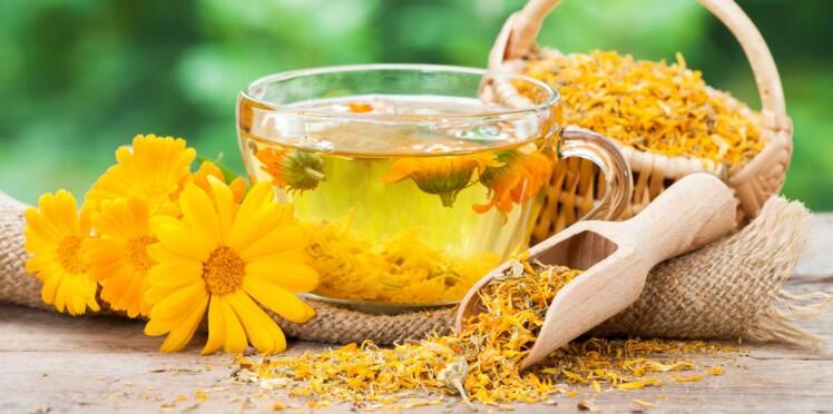Phytothérapie : les vertus santé du calendula