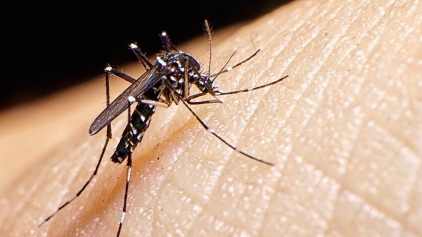 20 millions de moustiques lâchés dans la nature pour éradiquer Zika