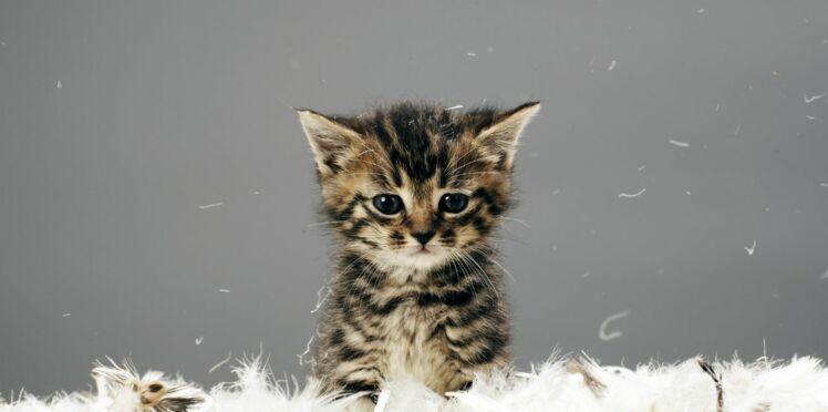 Vous êtes allergique ? Vaccinez… votre chat !