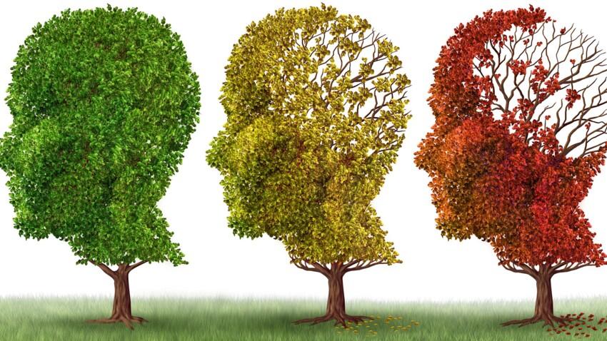 Alzheimer : un cocktail contre le vieillissement du cerveau