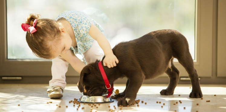 Asthme : adopter un chien préviendrait les risques chez l'enfant