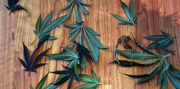 Cannabis : son usage thérapeutique autorisé à New-York