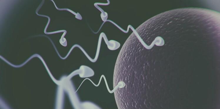 Les cellules souches, un espoir dans l'insuffisance ovarienne