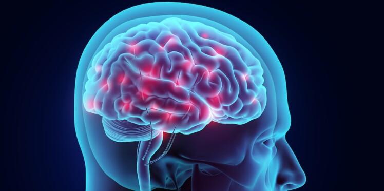 Le cerveau adulte toujours en croissance ?