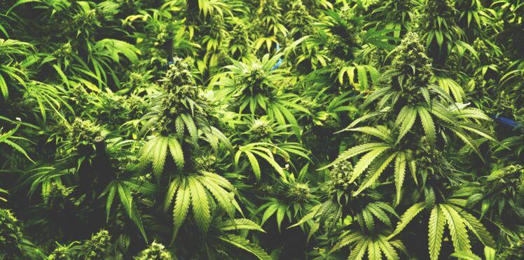 Un composant du cannabis réduirait les crises d'épilepsie