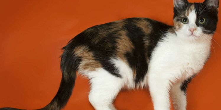 Crotte de chat et arme anti-cancer