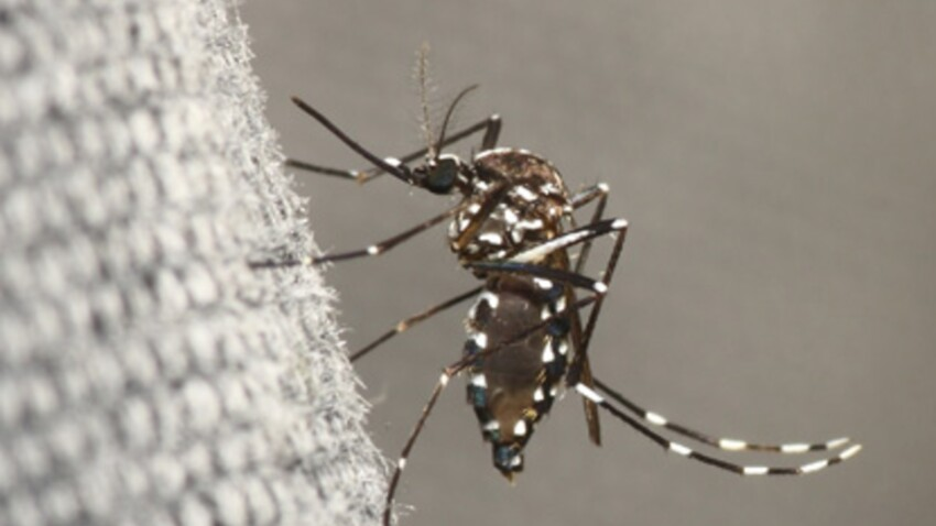 La dengue en forte hausse en Martinique