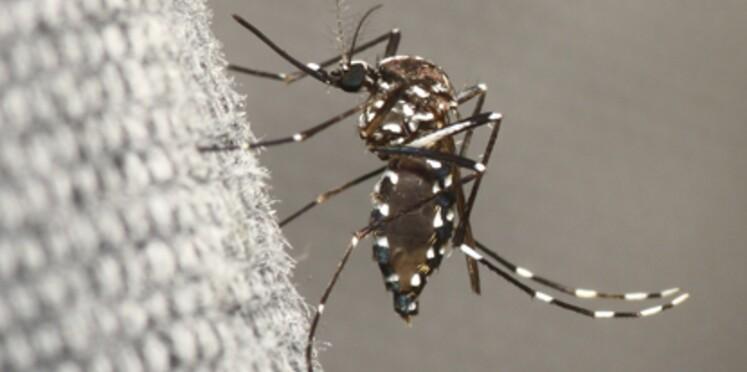 Mobilisez-vous contre la dengue