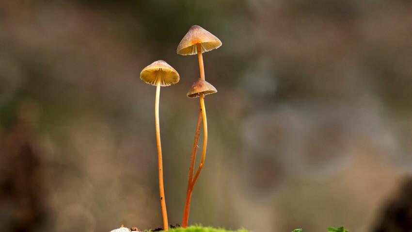 Les champignons hallucinogènes (vraiment) efficaces pour lutter contre la dépression?