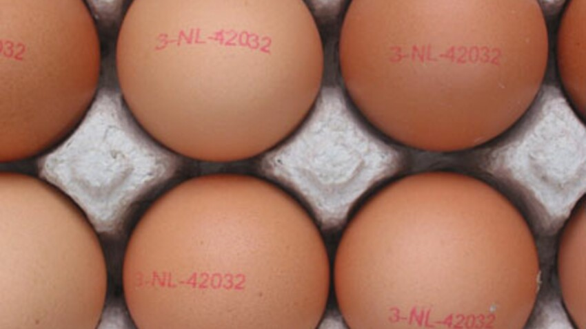 Des œufs pour maigrir