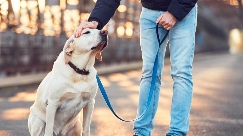 Diabète : des chiens capables de sauver la vie des malades