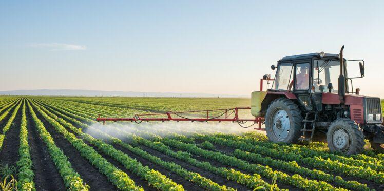 Pesticides : bientôt une dose maximale dans l'assiette ?
