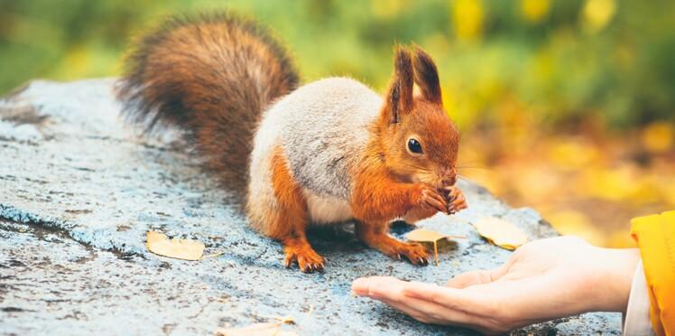 Des écureuils porteurs de la lèpre découverts au Royaume-Uni