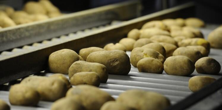 Epidémie à Clarebout potatoes : on en sait plus sur la mystérieuse maladie