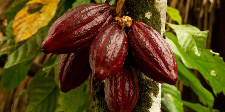 Du cacao pour booster la mémoire