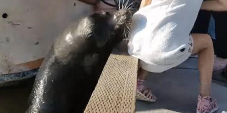 La fillette attaquée par une otarie victime d'une grave infection suite à la morsure de l'animal