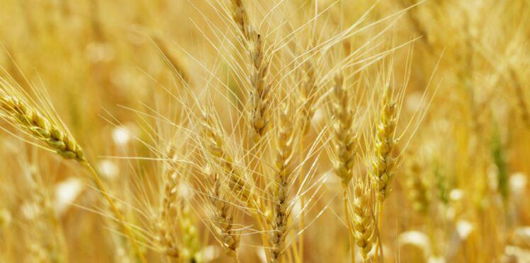 Un probiotique contre l'intolérance au gluten