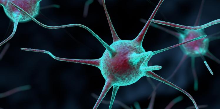 La greffe de neurones pourrait permettre au cerveau de se réparer seul
