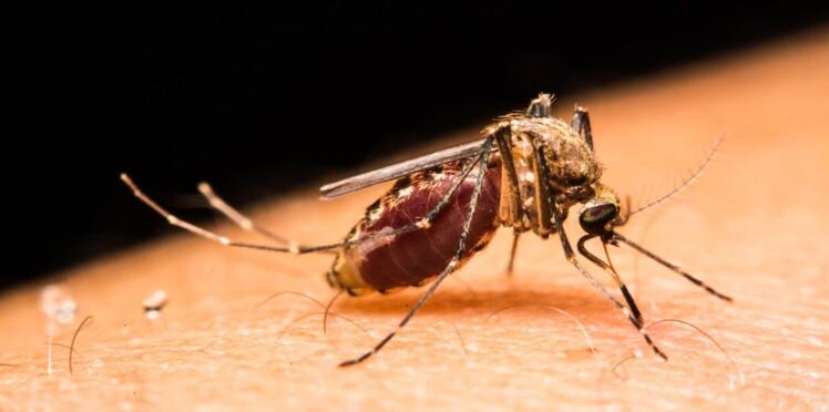 Afrique : l'épidémie de fièvre jaune inquiète