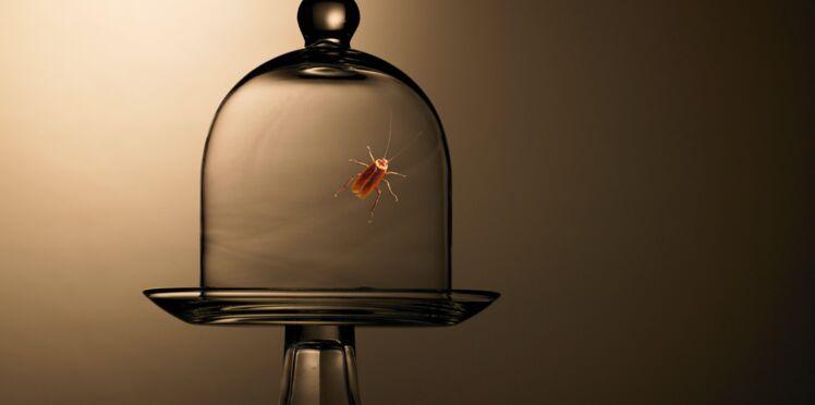 Des insectes pour guérir