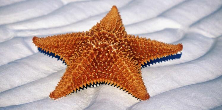 L'étoile de mer va peut être vaincre la mucovicidose