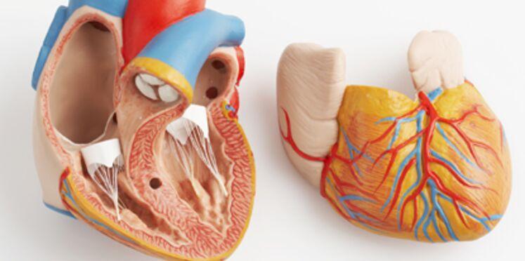 La pollution aurait des effets néfastes sur la fonction cardiaque