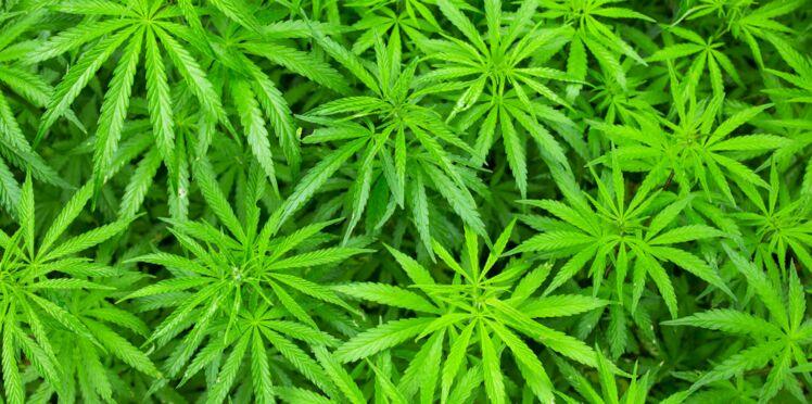Le cannabis ferait pousser la poitrine des hommes