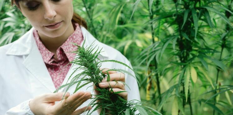 Le cannabis pourrait préserver notre cerveau des ravages de la vieillesse