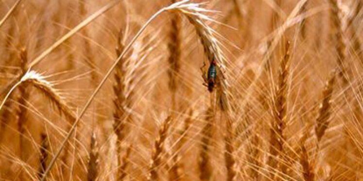 """""""Le monde selon Monsanto - de la dioxine aux OGM, une multinationale qui vous veut du bien"""""""