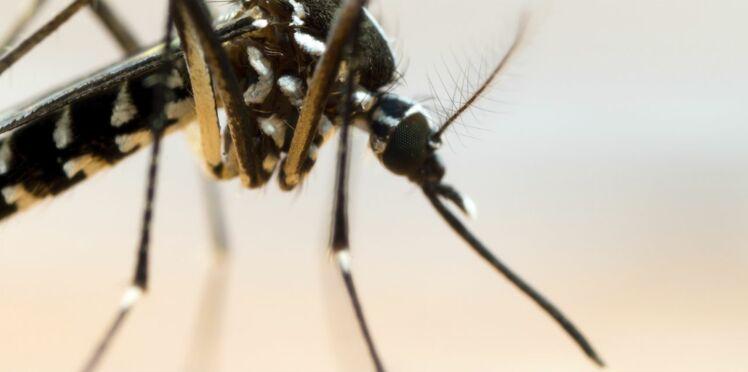 Alerte au moustique tigre en France : comment l'éviter et s'en protéger ?