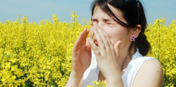 Allergie aux pollens d'ambroisie : risque élevé dès le 10 août