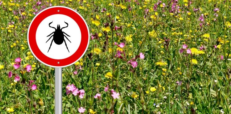 Maladie de Lyme : 130 patients assignent 2 laboratoires en justice