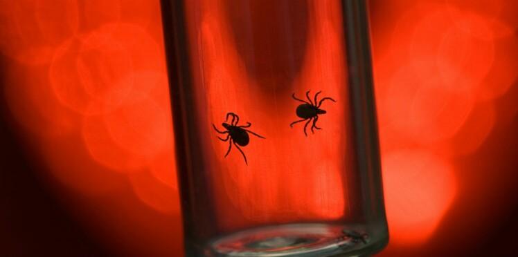 Maladie de Lyme : ils campent devant le ministère de la Santé pour se faire entendre