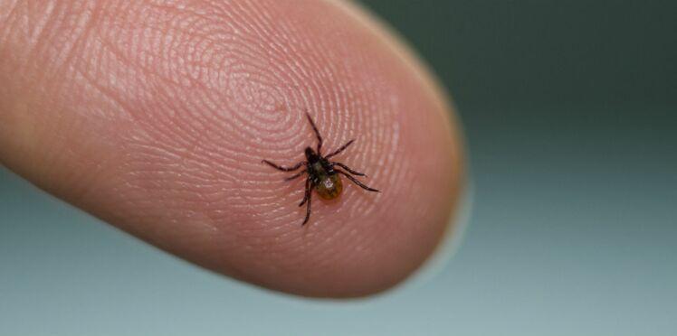 Maladie de Lyme : pour les médecins, « il y a urgence »