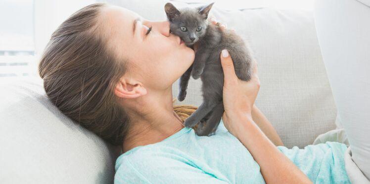 Infection : Attention à « la maladie des griffes du chat » !