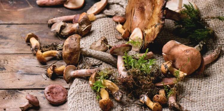 Manger des champignons préviendrait la maladie d'Alzheimer