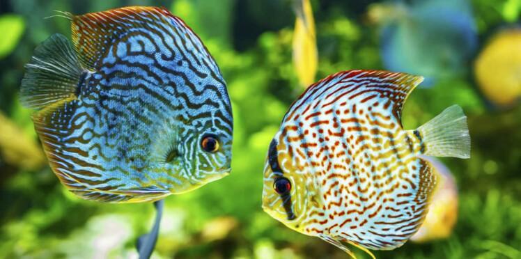 Observer les poissons, c'est bon pour la santé !