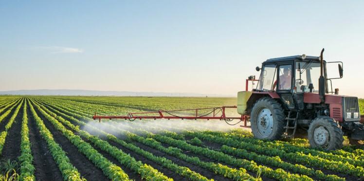 Perturbateurs endocriniens : le gouvernement publie une liste de 1600 pesticides suspects