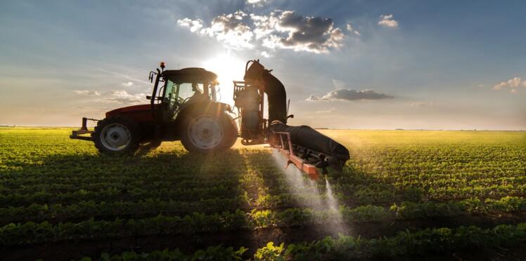 Surpoids, diabète… Même à faible dose dans l'alimentation, les pesticides sont dangereux