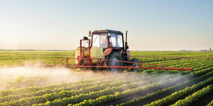 Pesticides : 61 cas de maladies professionnelles chez les agriculteurs en 2016