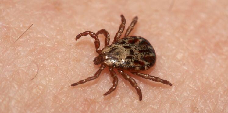 Piqûres de tiques: le vaccin pour enfants contre les infections graves en rupture de stock