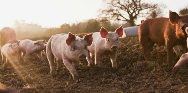 Pour notre santé, il est nécessaire de mieux nourrir les animaux
