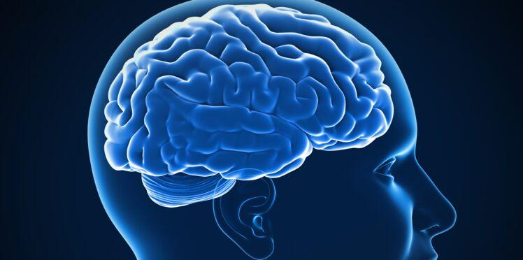 Découvrez pourquoi le cerveau humain est de plus en plus en gros