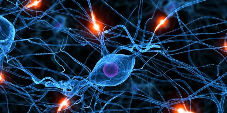 Réparer les neurones : bientôt possible