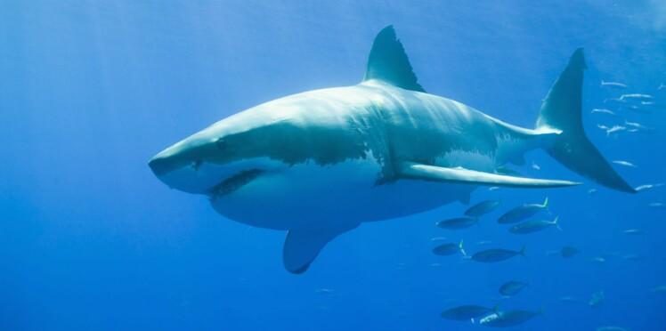 États-Unis: une attaque de requin lui révèle son cancer