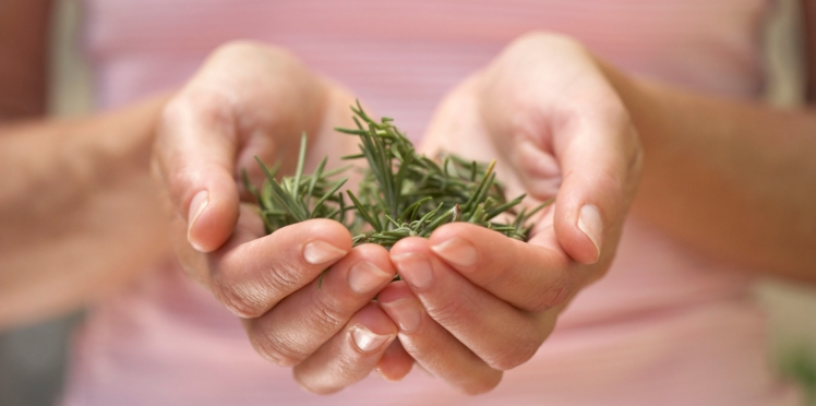 Le romarin, une herbe aromatique pour vivre centenaire ?