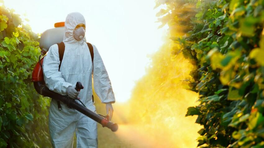 Pesticides : des résidus de glyphosate dans les urines de 30 personnalités