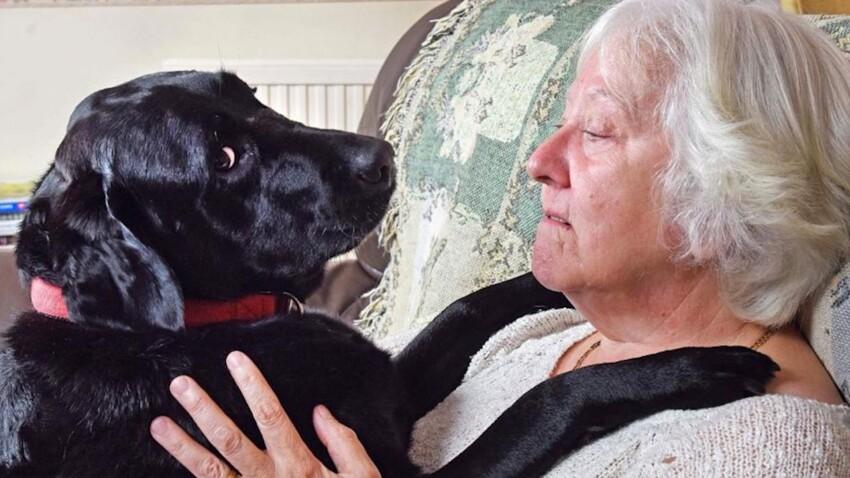 Un chien détecte le cancer du sein de sa maîtresse